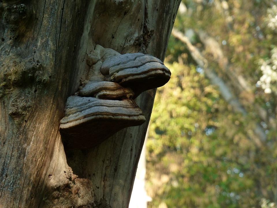Tree, Bark, Drevokazná, Sponge, Tree Trunk, Nature