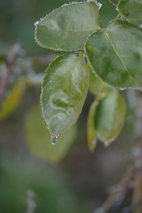 Leaves, Nature, Drops