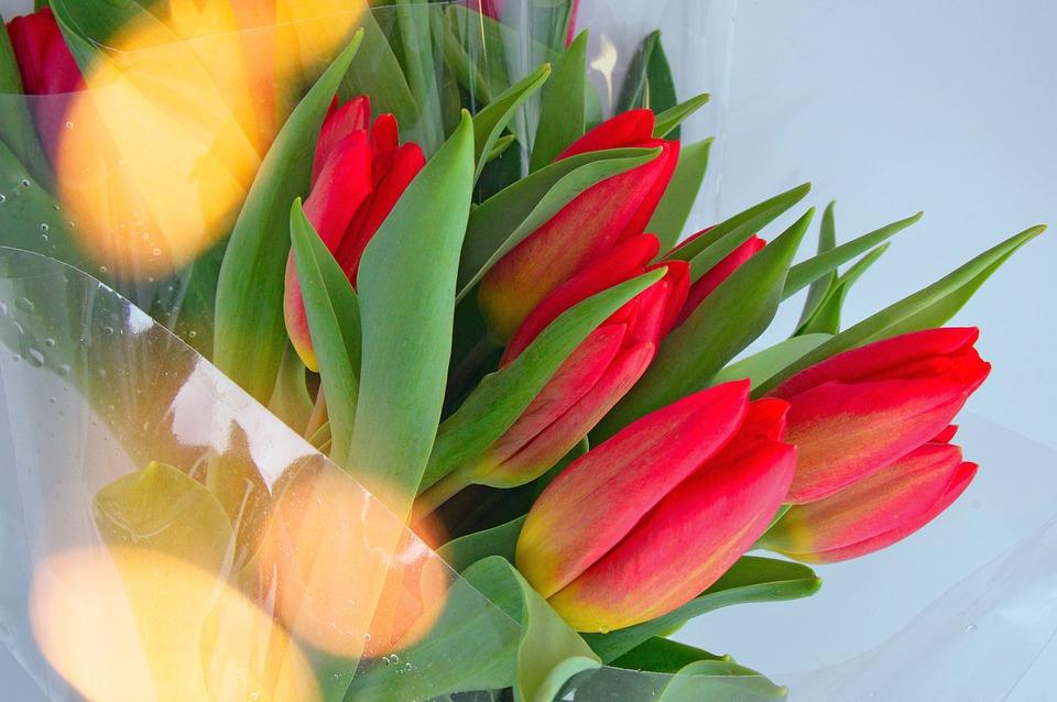 Tulip, Nature, Leaf Plants, Flower, Plant, Easter