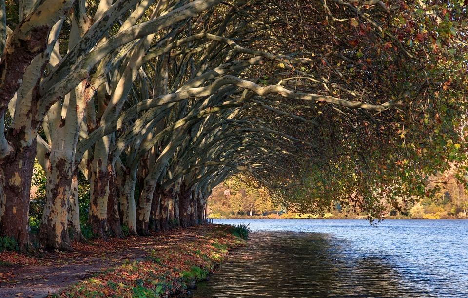 Baldeneysee, Eat, Lake, Nature, Water, Landscape, Bank