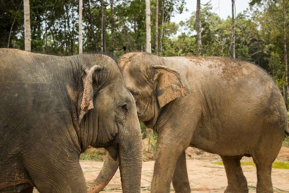 Elephant, Safari, Nature, Animal, Africa