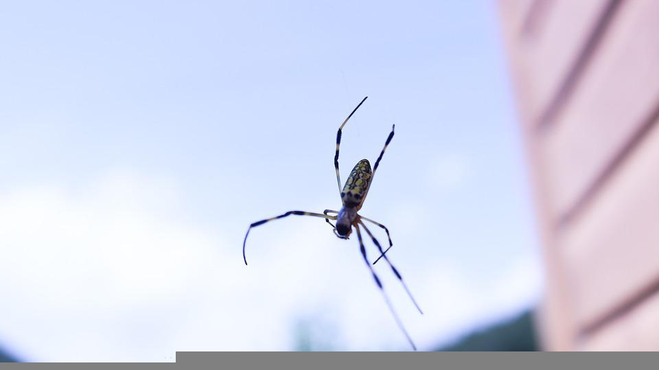 Spider, Insect, Nature, Arachnid, Entomology