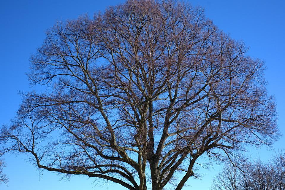 Tree, Crown, Wood, Forest, Winter, Environment, Nature