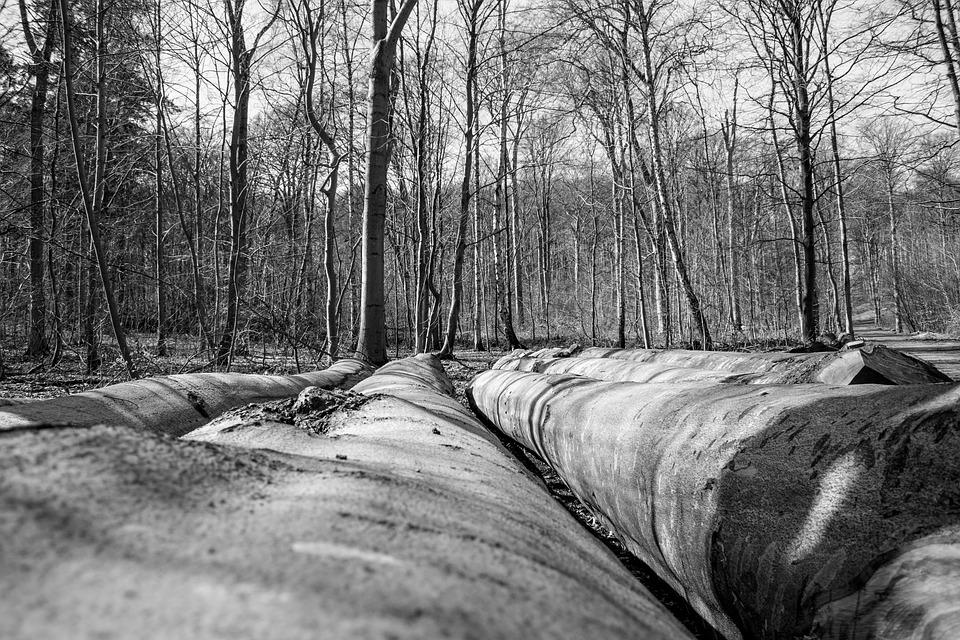 Wood, Tree, Nature, Landscape, Environment, Outdoors