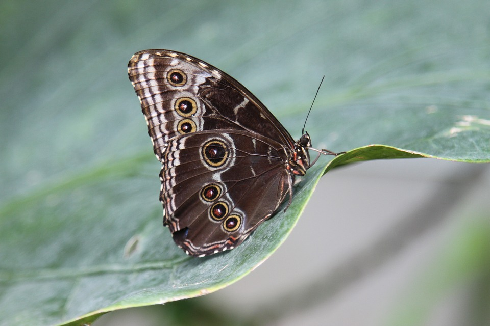 Butterfly, Wings, Insect, Nature, Wildlife, Exotic