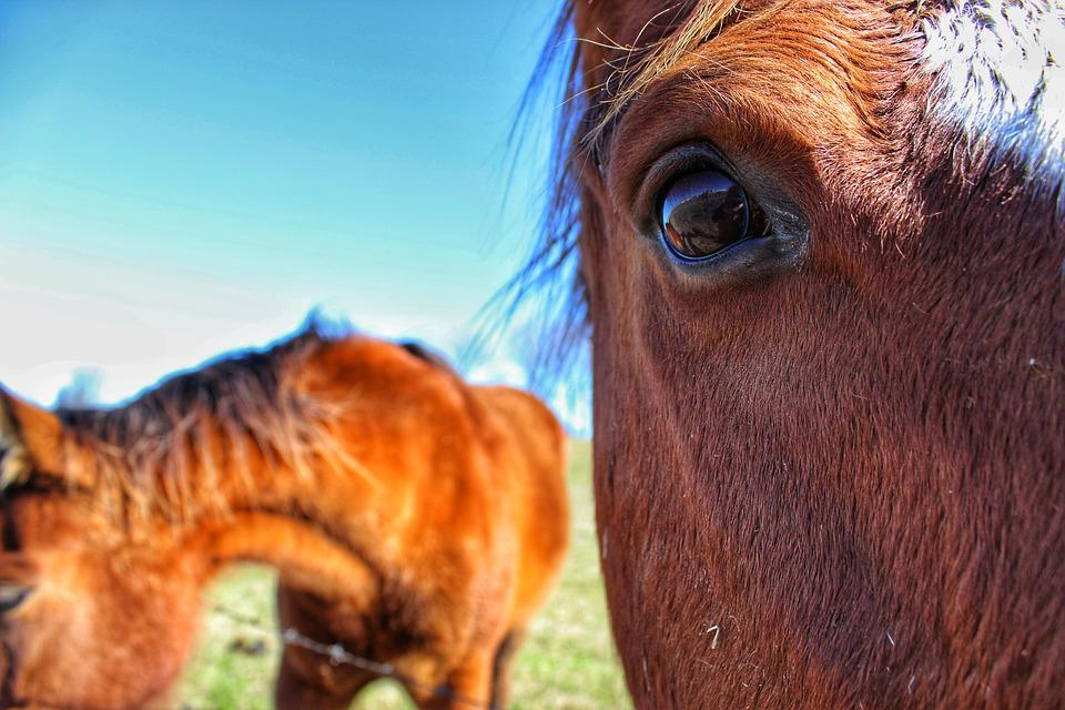 Horse, Eye, Up Close, Brown, Grazing, Levee, Nature