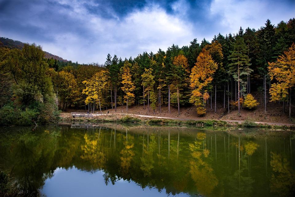 Landscape, Fall Color, Trees, Nature, Autumn Mood