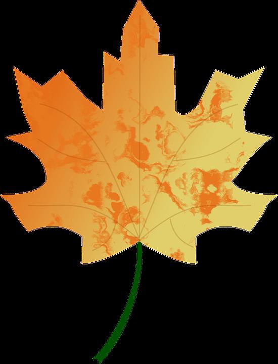 Autumn, Colours, Fall, Leaf, Nature, Seasons, Tree