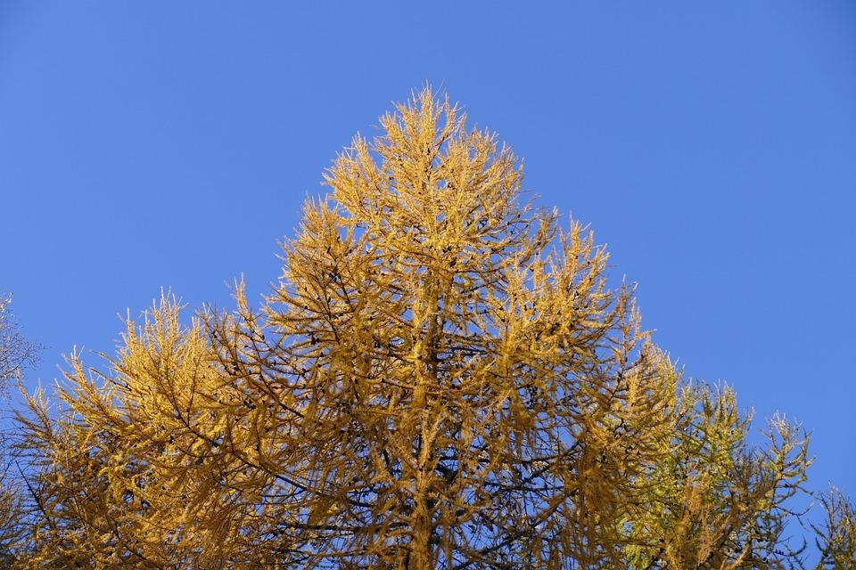 Tree, Nature, Wood, Fall, Season, Leaf, Landscape