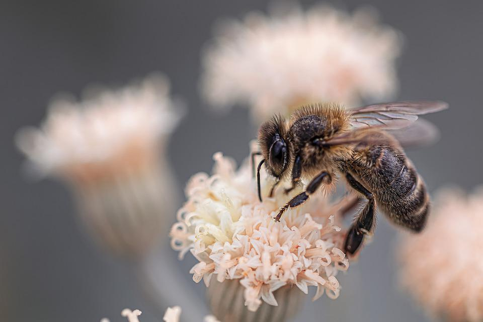 Macro, Bee, Insects, Nature, Fauna, Detail