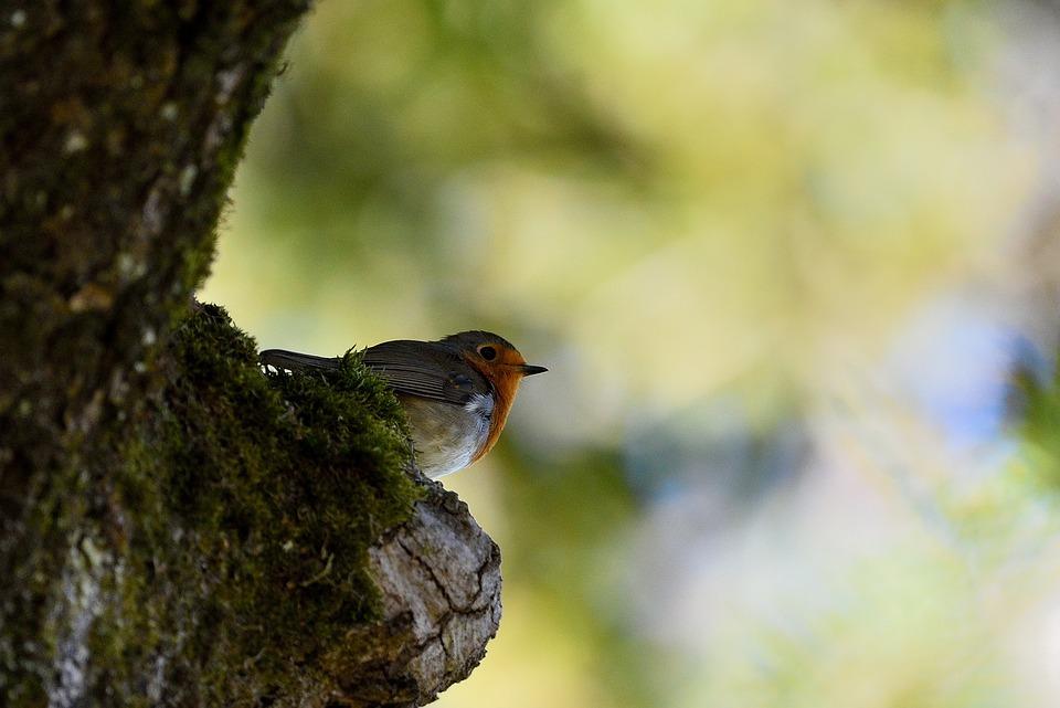 Bird, Nature, Fauna, Outdoor