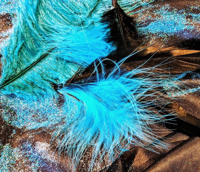Feather, Nature, Color, Desktop, Beautiful, Bright