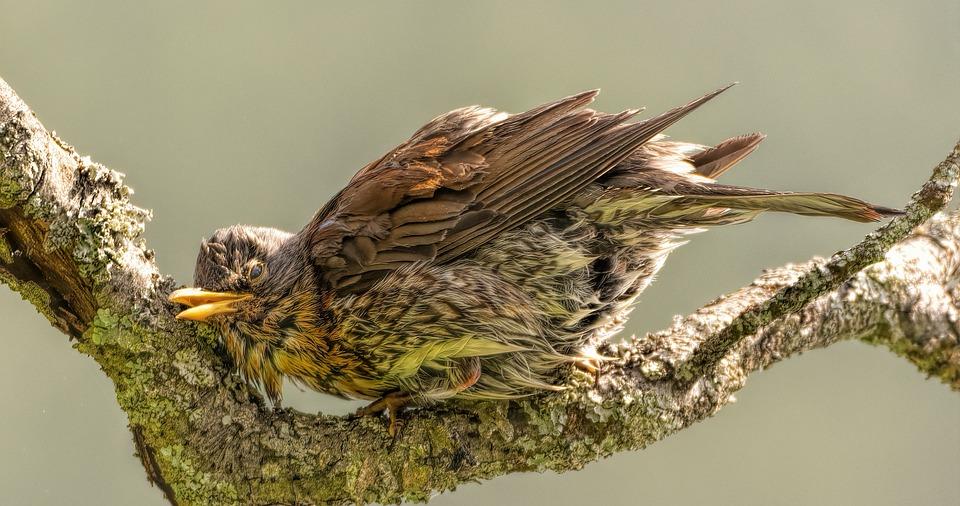 Bird, Animal, Wildlife, Nature, Feather, Fauna