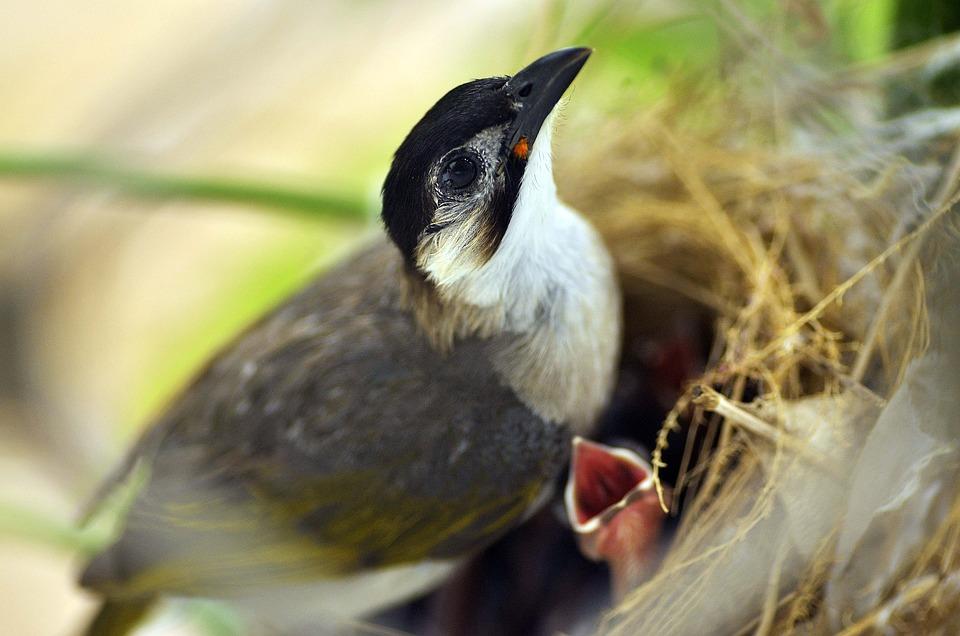 Bird, Nest, Life, Animal, Feather, Nature, Wildlife