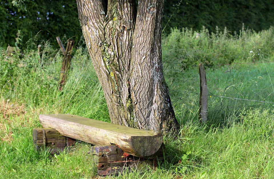 Bank, Wooden Bench, Bench, Seat, Nature, Tree, Fence
