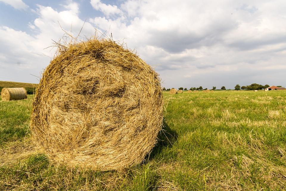 Hay Bales, Hay, Harvest, Summer, Field, Nature
