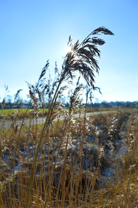 Grasses, Nature, Field Mark