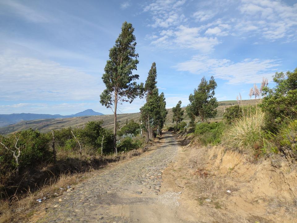 Field Path, Gravel, Path, Landscape, Nature, Ecology
