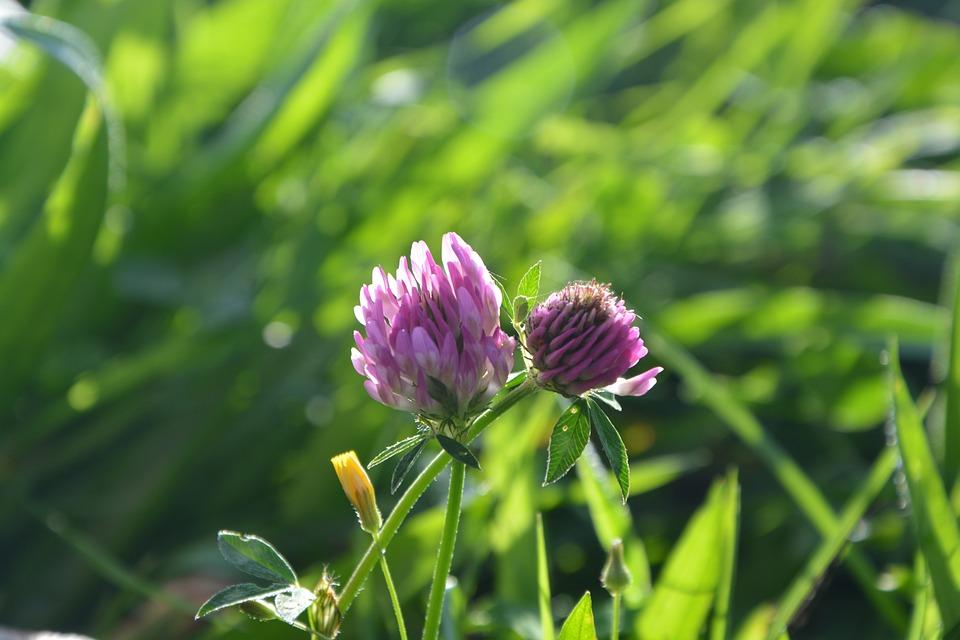 Free photo nature fields field flowers purple clover prairie max pixel flowers purple clover nature prairie fields field mightylinksfo