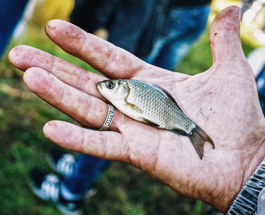 Fish, Fishing, Catch, Palm, Fingers, Nature, Outdoors