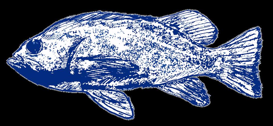 Fish, Blue, Sea, Water, Nature, Ocean