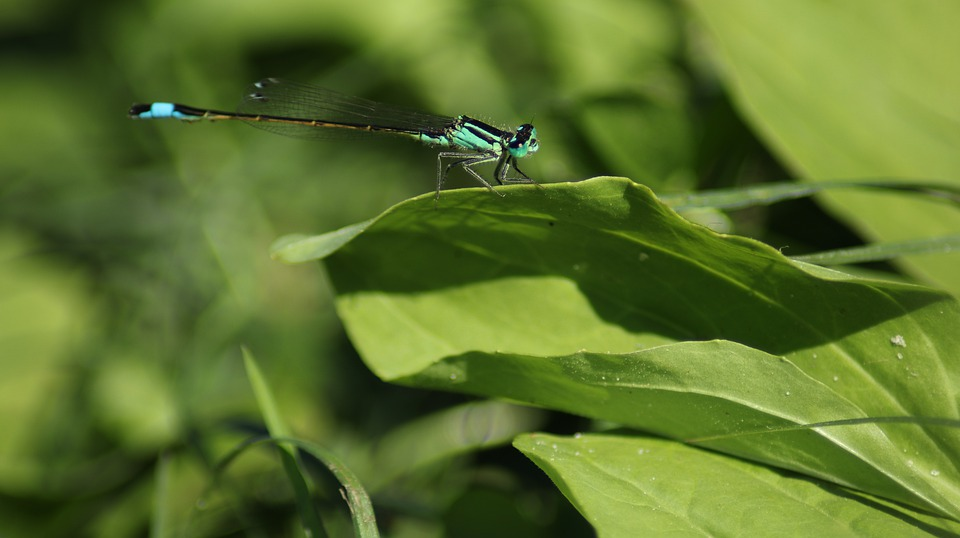 Dragonfly, Blue, Nature, Insect, Flight Insect