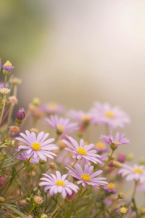 Flowers, Flora, Nature, Bloom, Garden, Floral, Pink