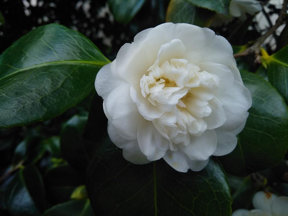 Flower, Nature, Leaf, Flora, Floral