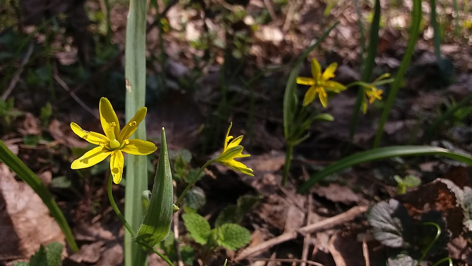 Nature, Flora, Flower, Season, Leaf