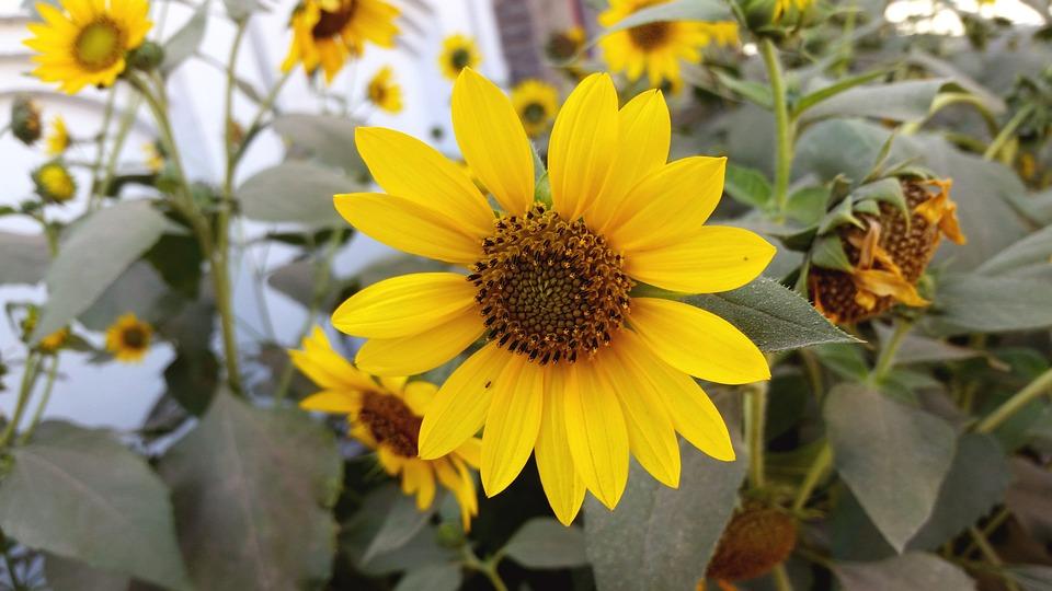 Flora, Nature, Flower, Summer, Leaf, Garden, Field