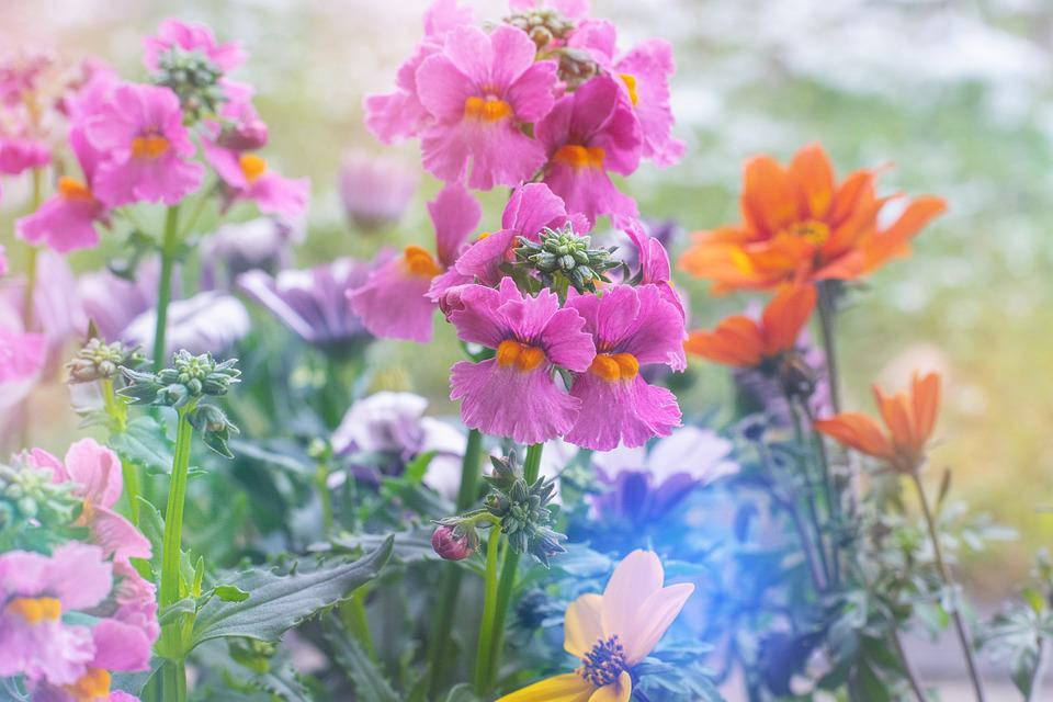 Flowers, Colorful, Spring, Flora, Nature, Pink