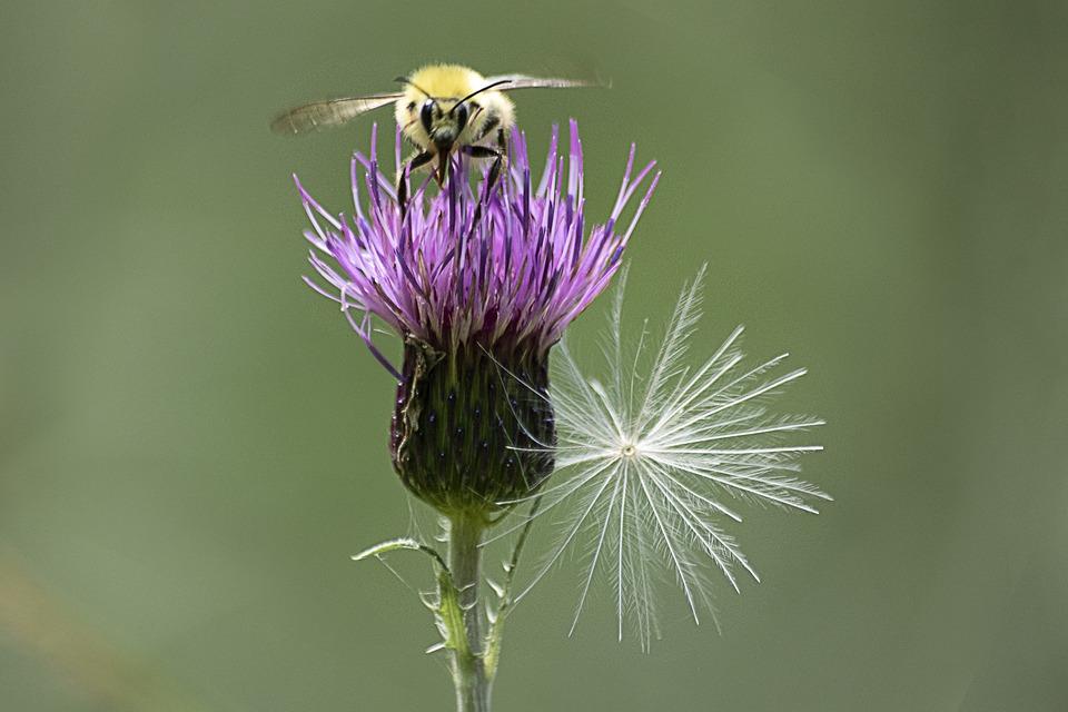 Flowers, Nature, Plants, Garden, Flora, Wildflower