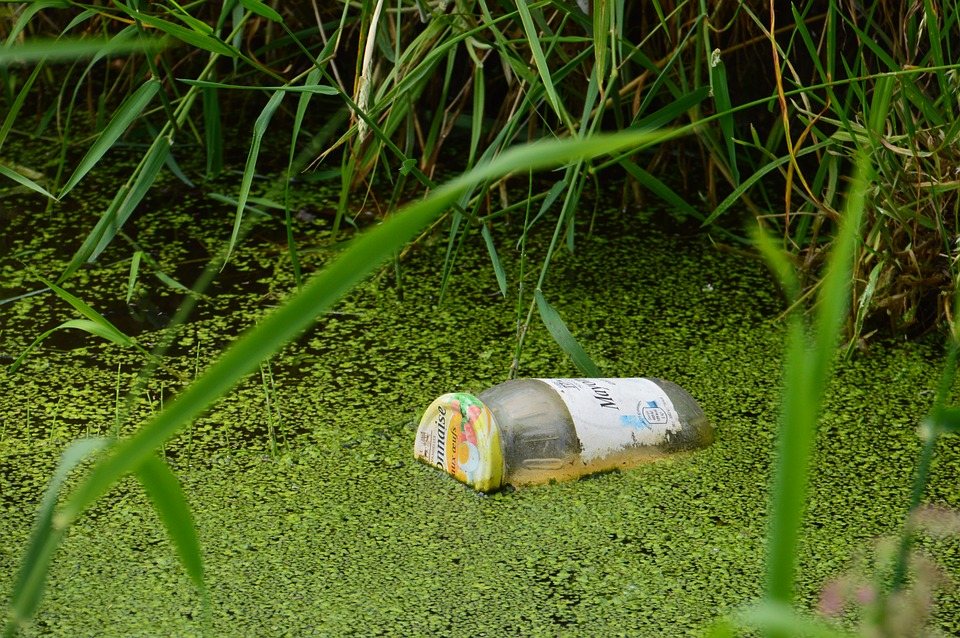 Pollution, Jar, Mayonnaise, Nature, Flora, Trash, Green