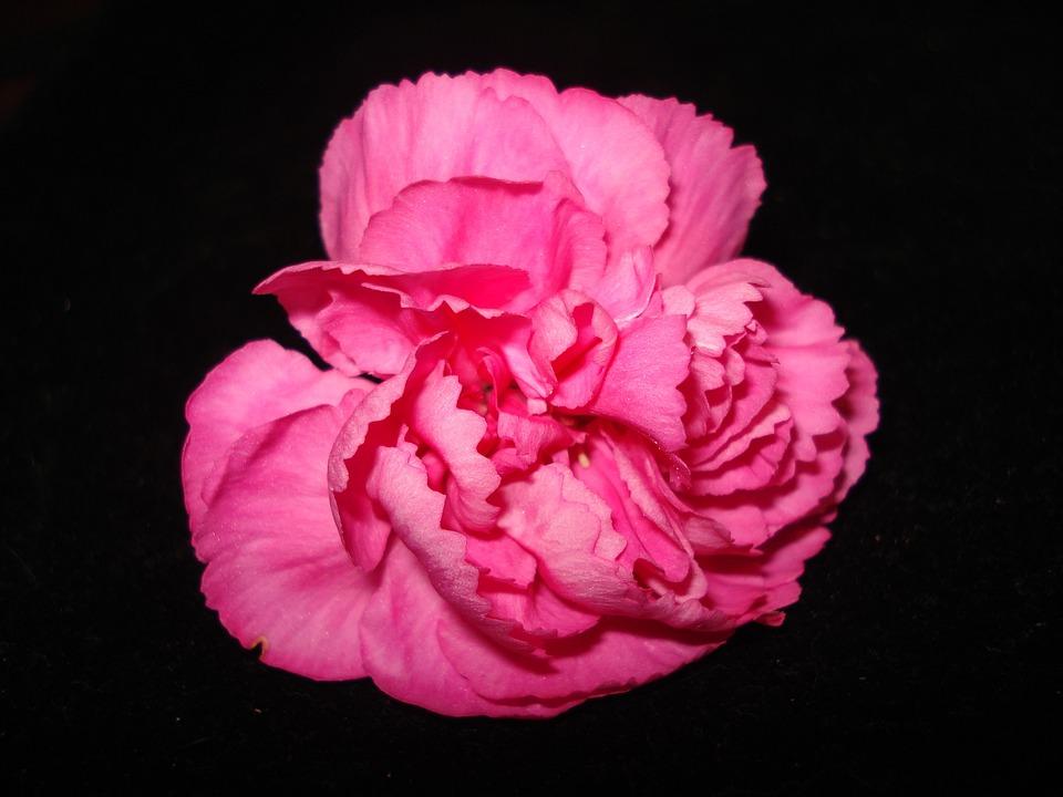 Flower, Petal, Nature, Flora, Beautiful