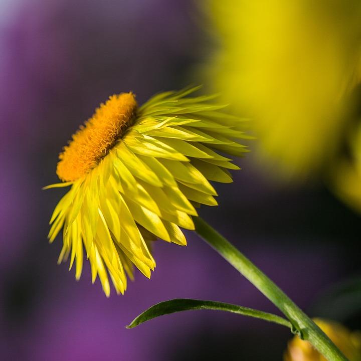 Nature, Flower, Flora, Summer, Bright