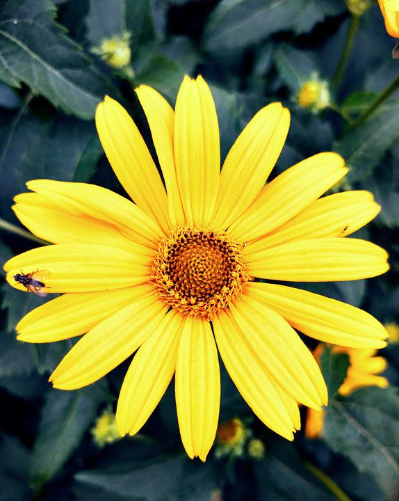 Nature, Flower, Summer, Garden, Bloom, Plant, Flora