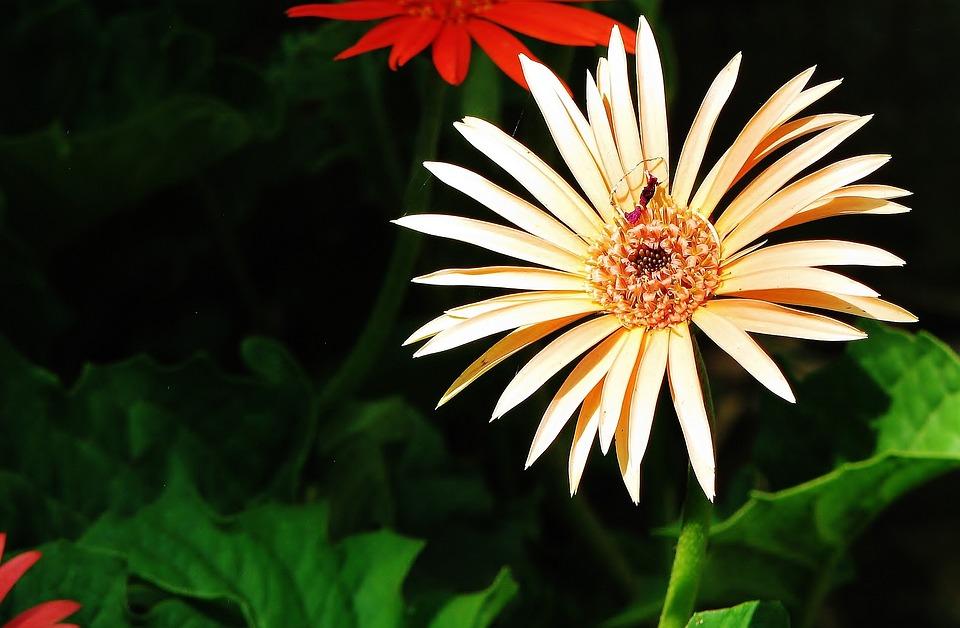 Flower, Blossom, White, Floral, Nature, Plant