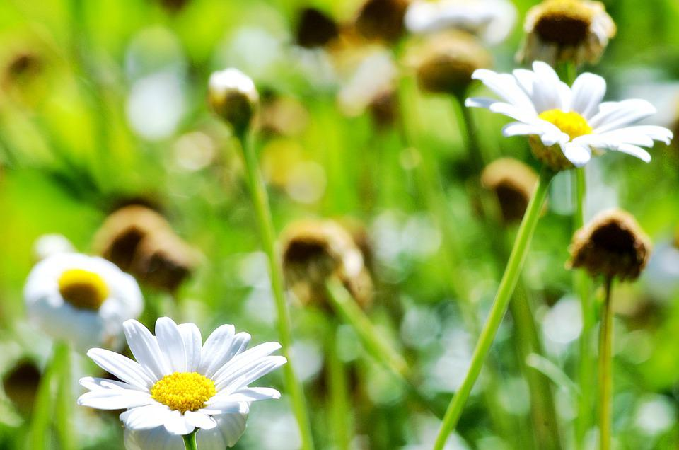 Flowers, Petals, Plants, Floral, Garden, Nature