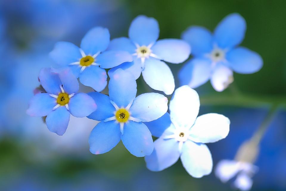 Flower, Nature, Plant, Petal, Spring, Leaf, Floral