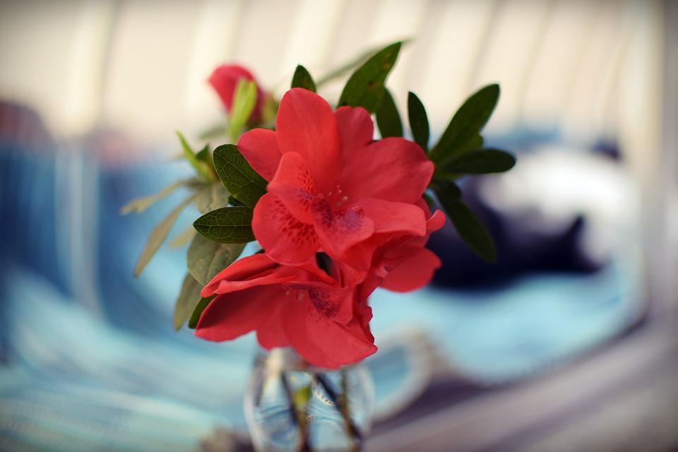 Flower, Red, Nature, Flowers, Flourish, Beautiful