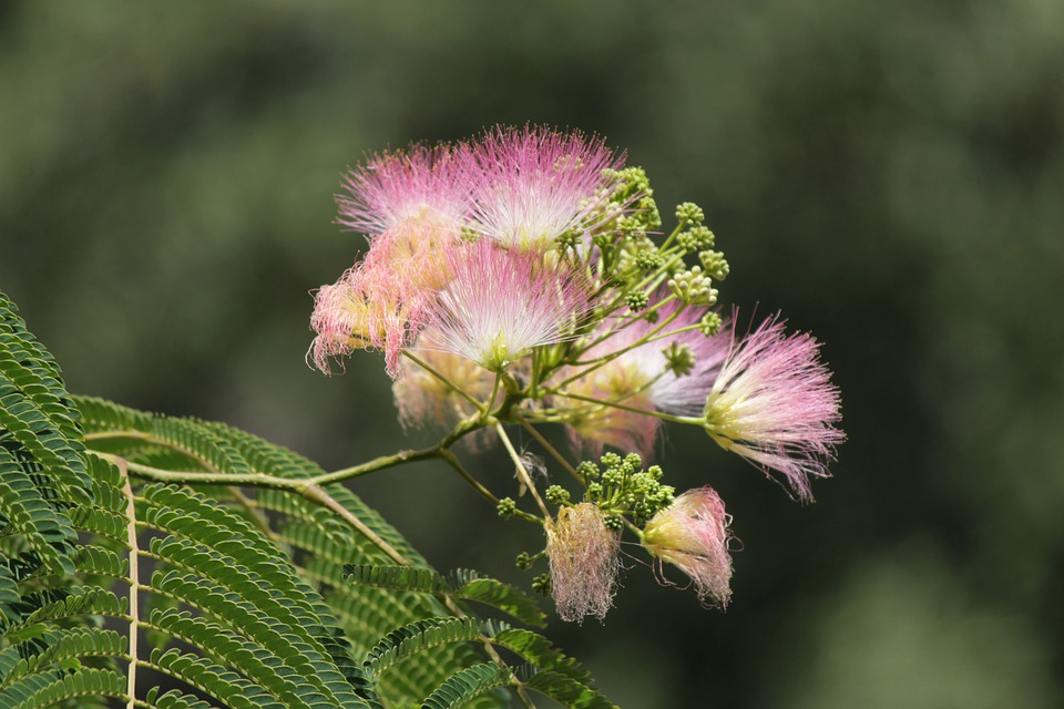 Tree, Flower, Bee, Spring, Pink, Nature, Garden