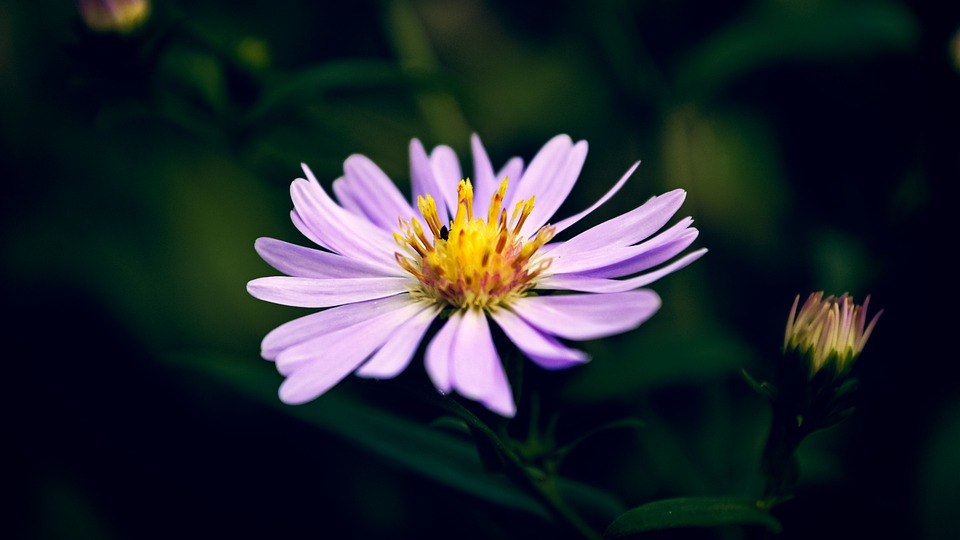 White Flower, Flower, Bloom, Nature, Plant, Flora