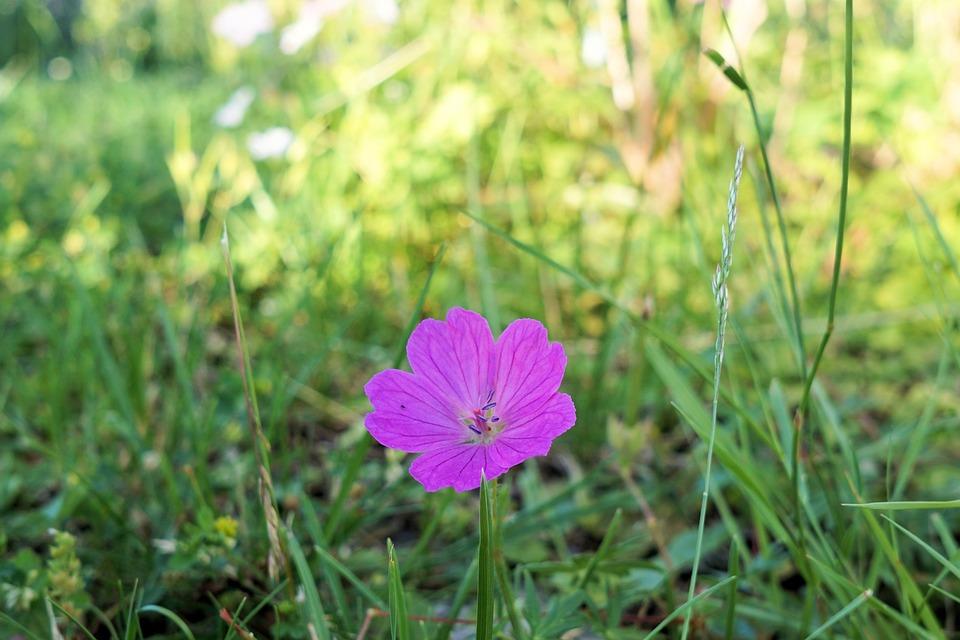 Flower, Blossom, Bloom, Garden, Sun, Plant, Nature