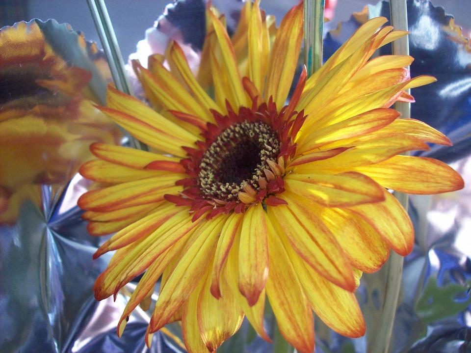 Flower, Daisy, Nature, Brightness, Light, Landscape