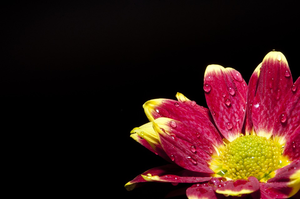 Flower, Drops, Yellow, Colorfull, Nature, Plant, Bloom