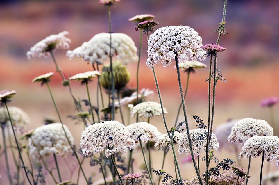 Nature, Outdoors, Flora, Flower, Season, Grass, Field