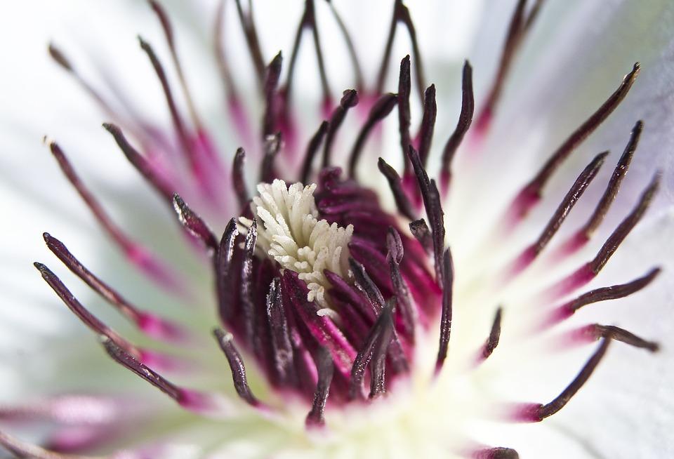 Flower, Passion Flower, Passiflora, Flora, Nature