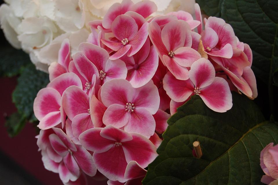 Flower, Nature, Floral