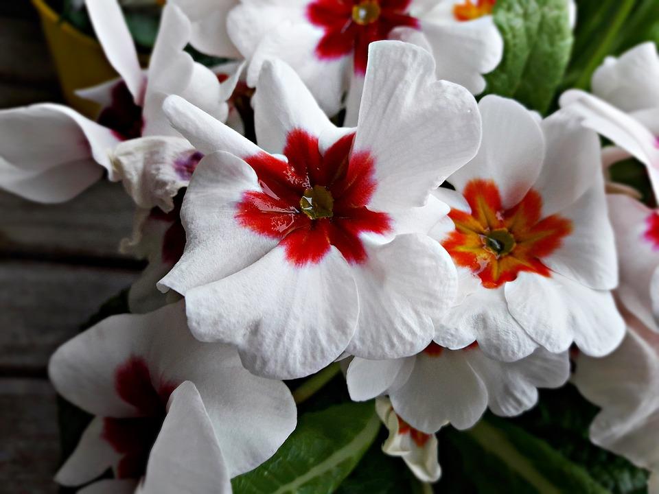 Flower, Plant, Floral, Nature
