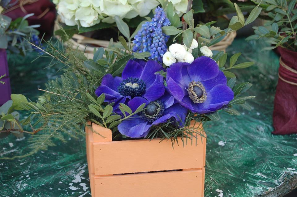 Flower, Nature, Flower Arrangement